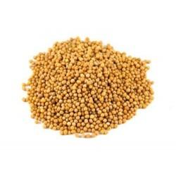 semi di senape giallo bio 1kg